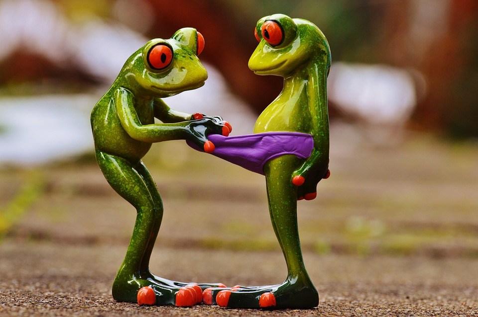 foto cc0 pixabay alexas daten frosch