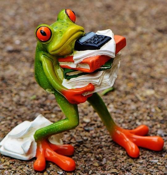 foto cc0 pixabay alexas fotos frosch organisation arbeit