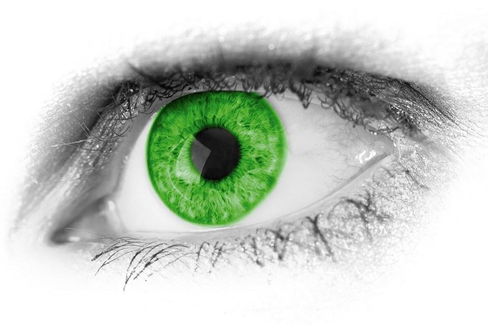 foto cc0 pixabay pdp auge grün