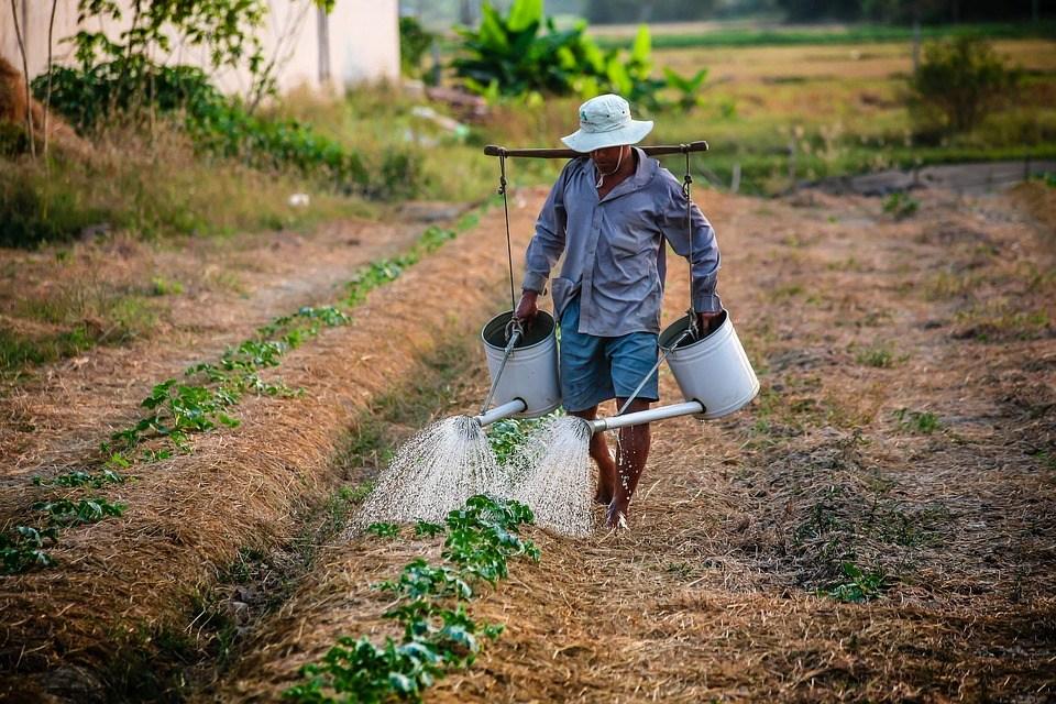 foto cc0 pixabay nguyenkhacqui landwirt vietnam