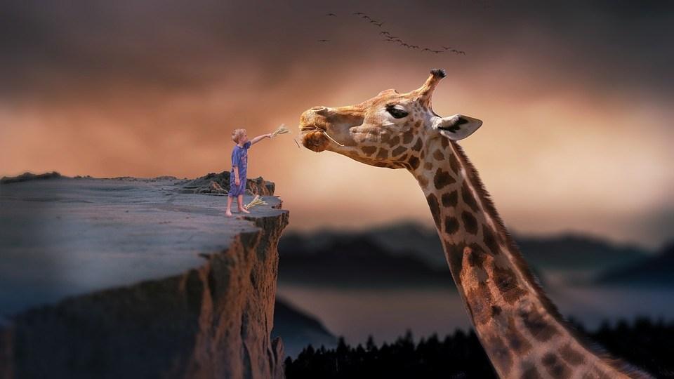 foto cc0 pixabay natopareira giraffe kind foto manipulation