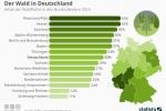 Tag des Waldes: Der Wald in Deutschland